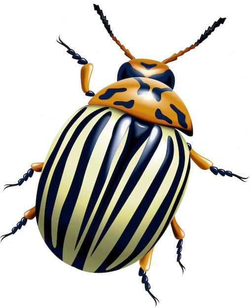 Колорадский жук Premium векторы