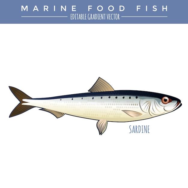 イワシ。海産魚 Premiumベクター