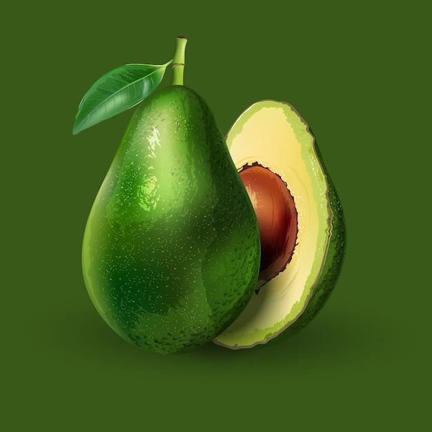 Авокадо реалистичная иллюстрация Premium векторы