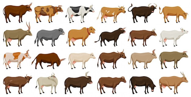 動物のベクトル漫画の牛は、アイコンを設定します。牛の分離漫画アイコンファーム動物 Premiumベクター