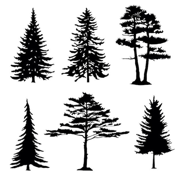 Силуэты хвойных деревьев, коллекция Premium векторы