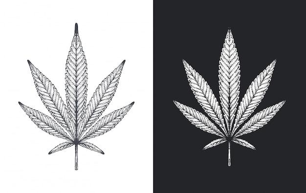 Конопля или марихуана листья вектор эскиз Premium векторы