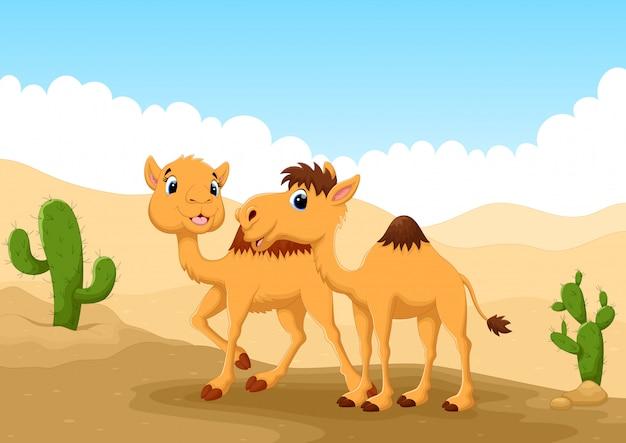 砂漠のラクダ Premiumベクター