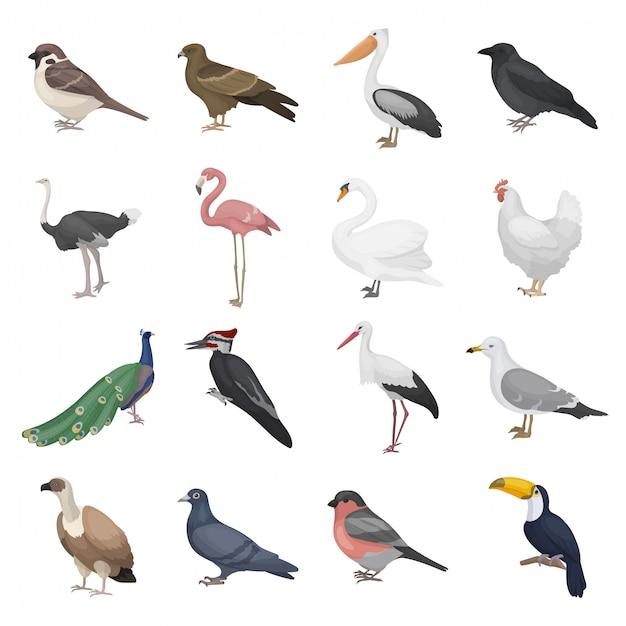 Набор реалистичных птиц Premium векторы