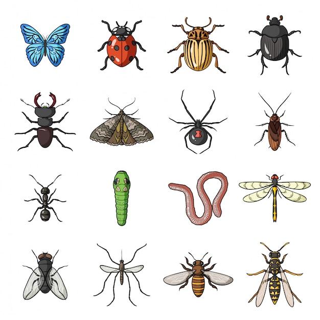 Насекомое и ошибка мультфильм установить значок. иллюстрация жук. изолированные мультфильм набор значок насекомых и ошибок. Premium векторы