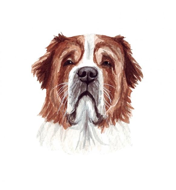 Акварельные иллюстрации смешные собаки. популярная собака породы. собака сенбернар. ручной персонаж, изолированный на белом Premium векторы