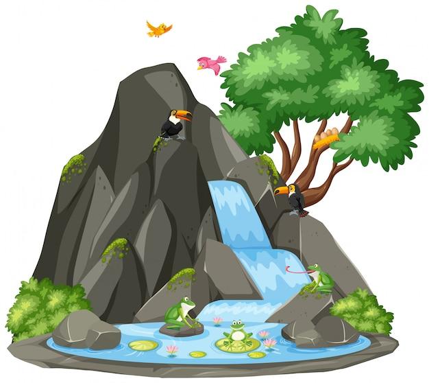 オオハシとカエルの滝の背景シーン Premiumベクター