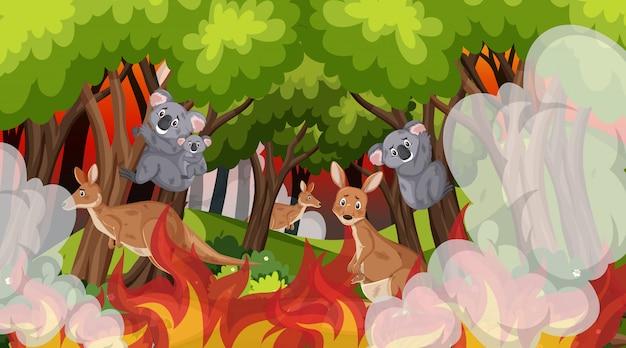 Сцена с коалами и кенгуру в большом лесном пожаре Premium векторы