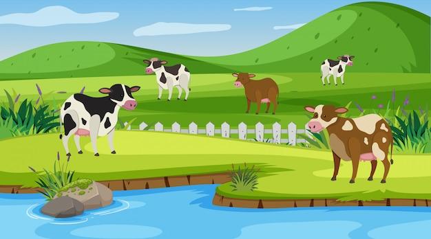 農場で多くの牛とのシーン Premiumベクター