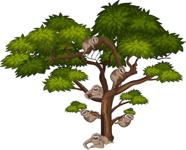 Большое дерево и много лени на белом Premium векторы