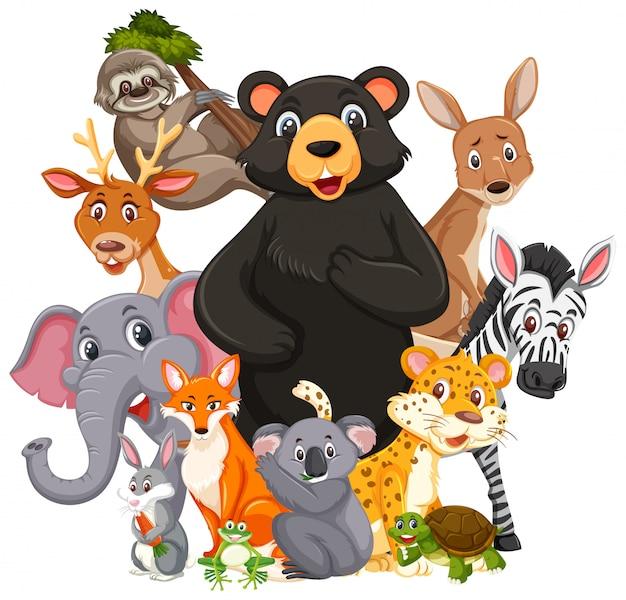 Различные виды диких животных изолированы Premium векторы