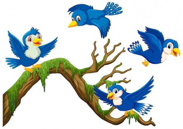 Четыре синие птицы летают вокруг ветви Premium векторы