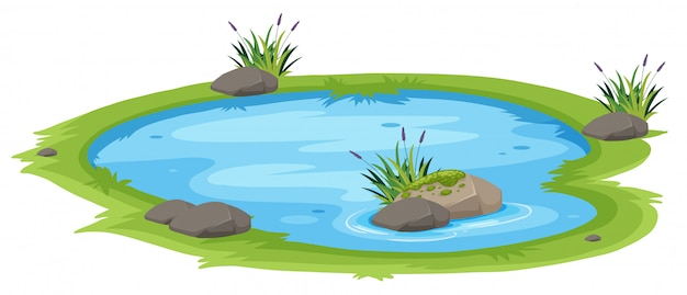Естественный пруд на белом фоне Premium векторы