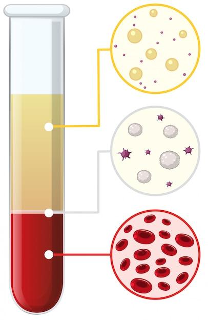 試験管内の血液細胞 Premiumベクター