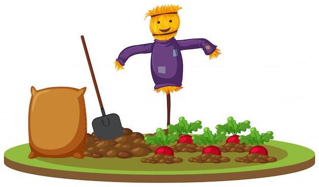 大根の農場でのかかし Premiumベクター