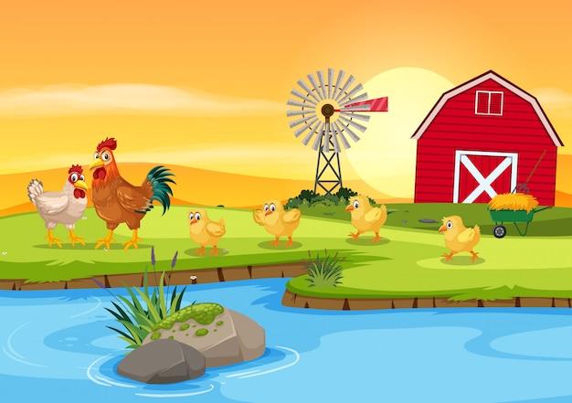 農場で鶏の家族 Premiumベクター