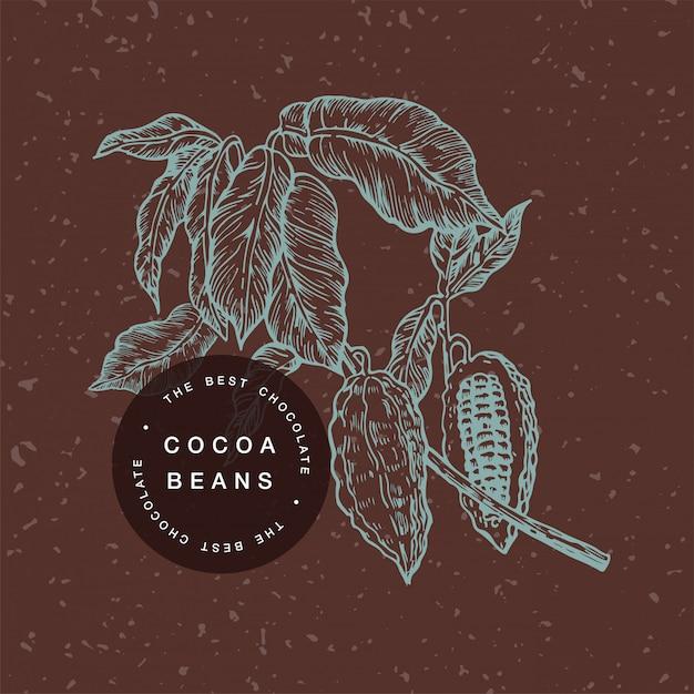 ココア豆の図。刻まれたスタイルの図。チョコレートカカオ豆。ベクトル図 Premiumベクター