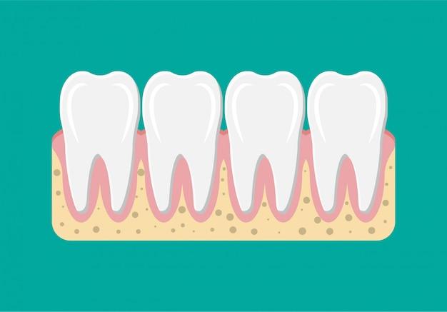Зуб с десной. Premium векторы