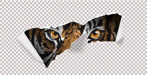 Дикая охота с тигром и коготь метки иллюстрации. Premium векторы