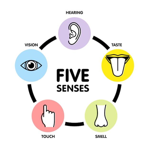 Пять чувств линии значков. Premium векторы