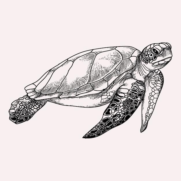 Морская черепаха черно-белая иллюстрация Premium векторы