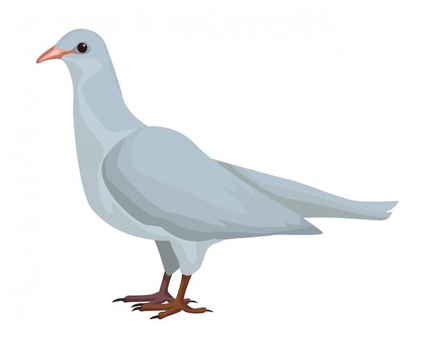 白い鳥の鳥 Premiumベクター