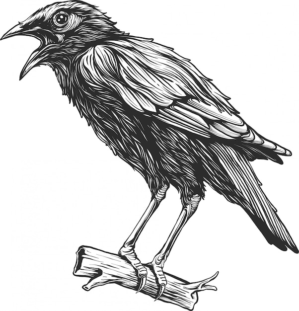 カラス鳥ヴィンテージ手描き Premiumベクター