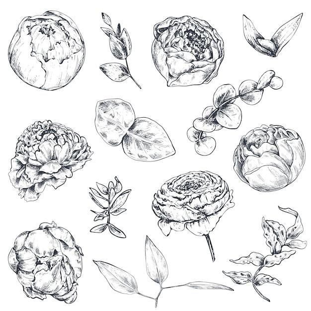 Коллекция рисованной цветов и растений. монохромные иллюстрации в стиле эскиза Premium векторы