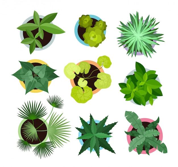 Векторные иллюстрации набор различных комнатных растений в горшках. вид сверху коллекция растений, кактусов в плоском мультяшном стиле. Premium векторы