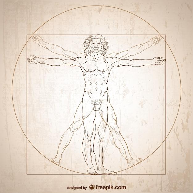 Витрувианский вектор человека. Бесплатные векторы