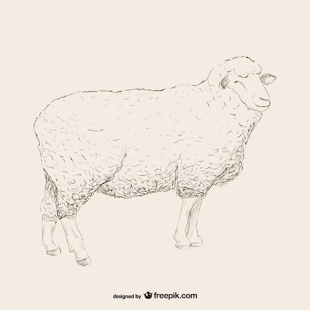 羊のスケッチのイラスト 無料ベクター