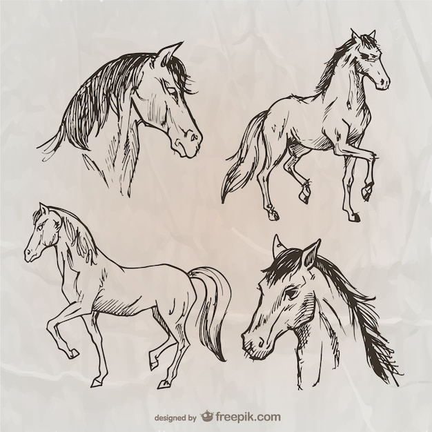 Вьючных лошадей Бесплатные векторы