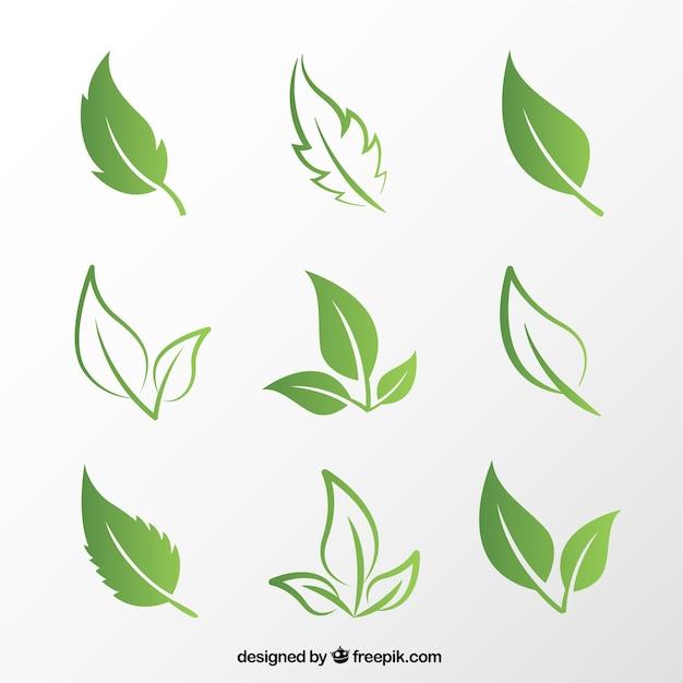 Зеленые листья Бесплатные векторы