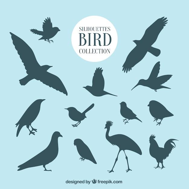 鳥のコレクションを概説 無料ベクター
