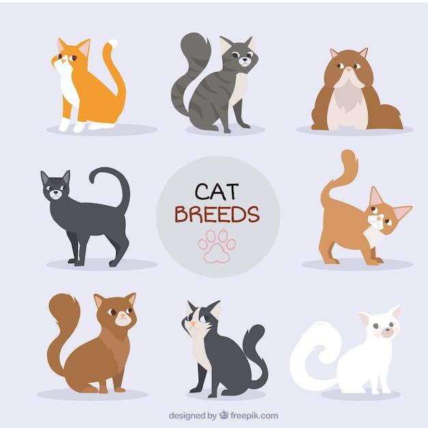 手描きの猫の品種のコレクション 無料ベクター