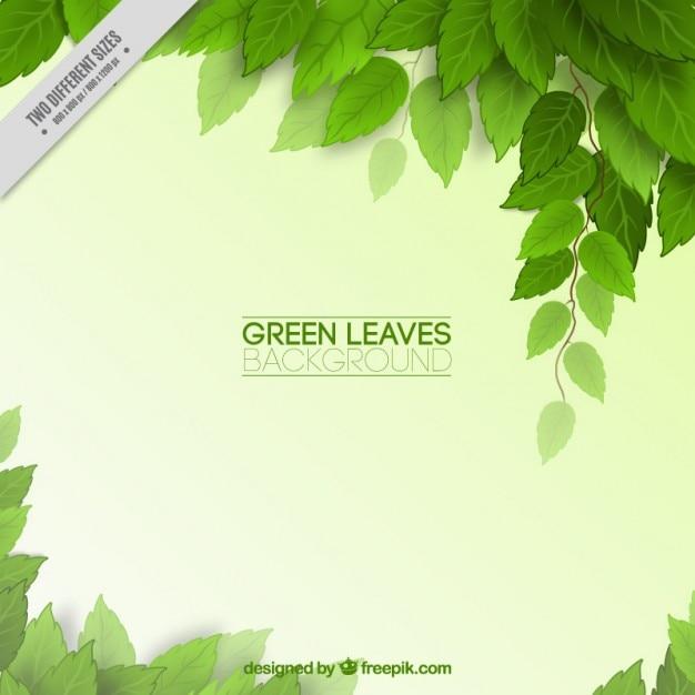 Зеленые листья фон Бесплатные векторы