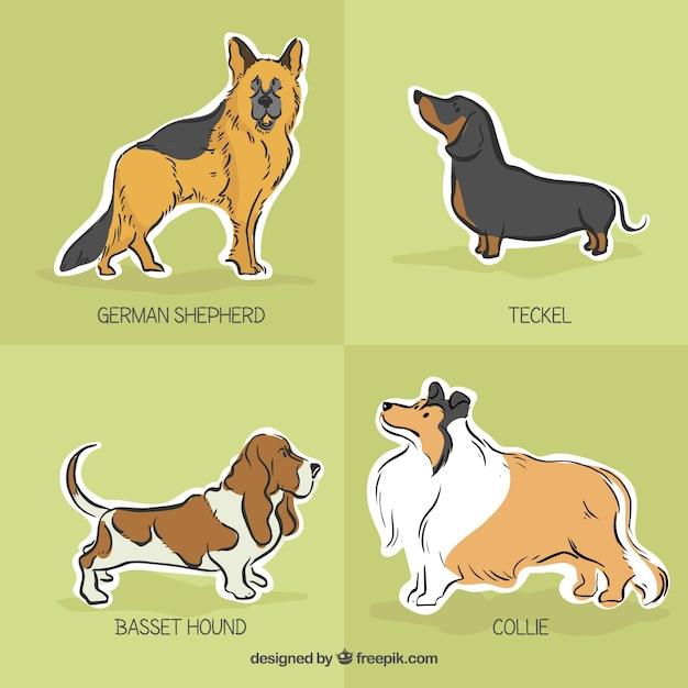 犬の品種のラベル 無料ベクター