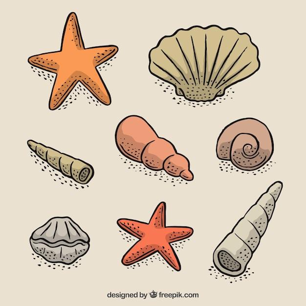 Набор ручной обращается с ракушек морских звезд Бесплатные векторы