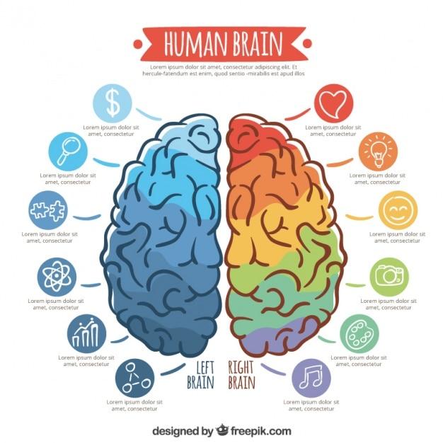 Инфографики шаблон красочных мозга Бесплатные векторы