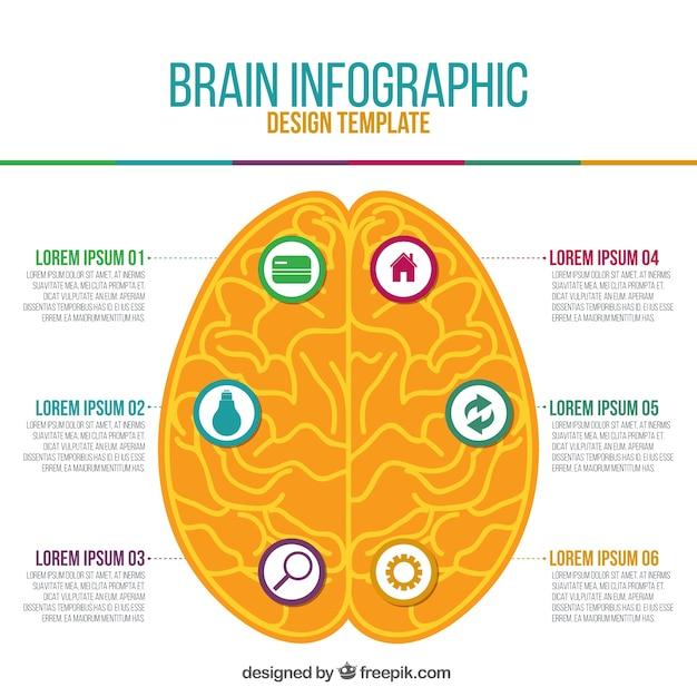 Инфографики апельсинового человеческого мозга Бесплатные векторы