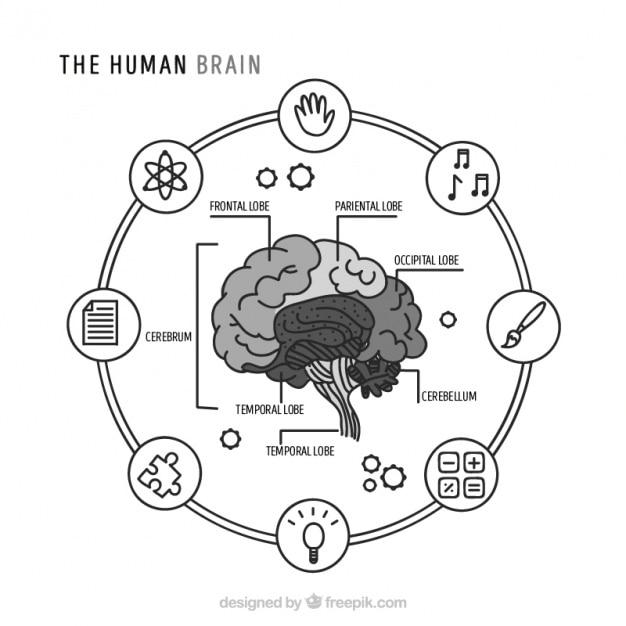 Круглый инфографики человеческого мозга Бесплатные векторы