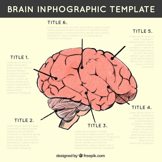 Инфографики человеческого мозга с различными вариантами Бесплатные векторы