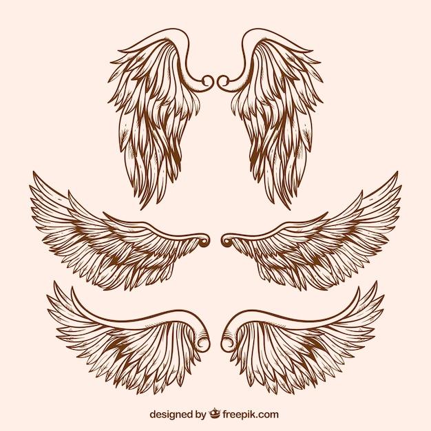 Разнообразие реалистичных крыльев Бесплатные векторы