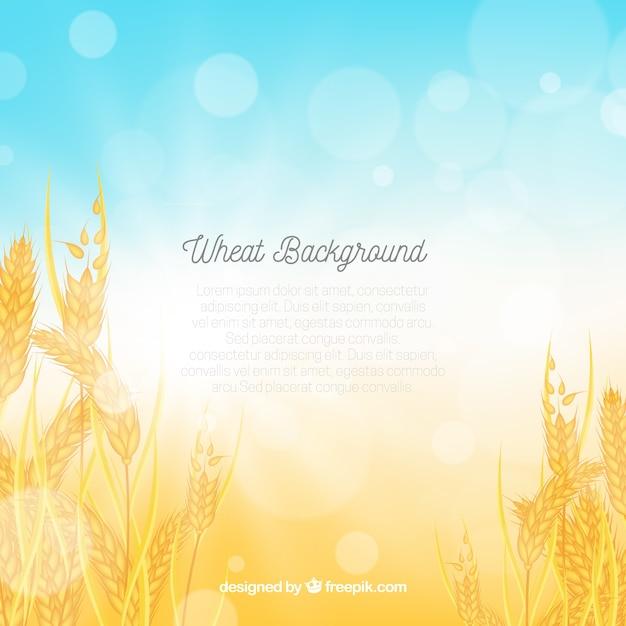 現実的な小麦の背景 無料ベクター