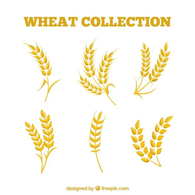 平らな小麦のコレクション 無料ベクター