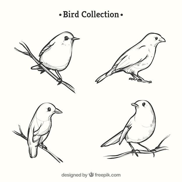 手で描かれた鳥のコレクション 無料ベクター