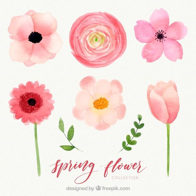 Коллекция акварельных весенних цветов Бесплатные векторы