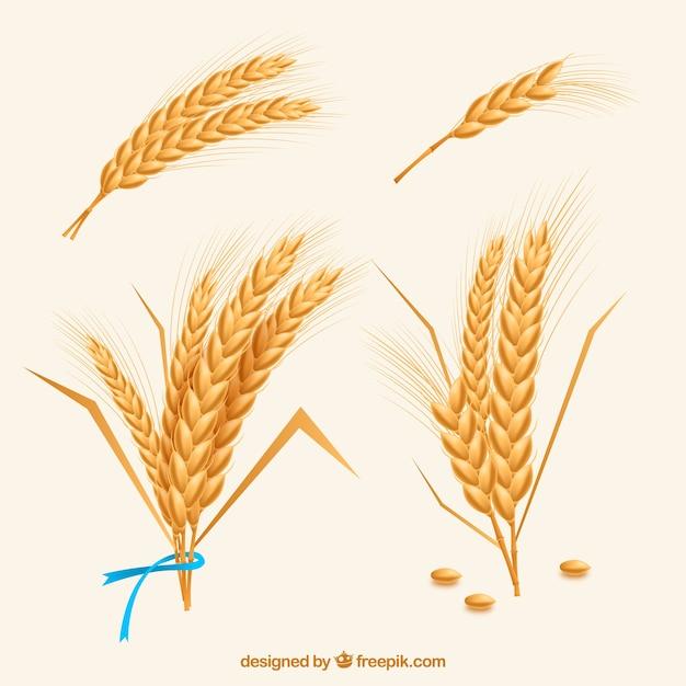 現実的な小麦コレクション 無料ベクター