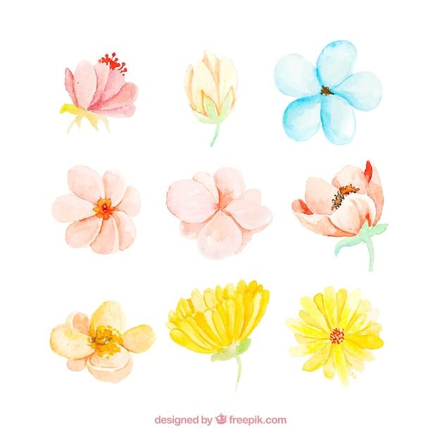 Коллекция акварельных весенних цветов из девяти Бесплатные векторы