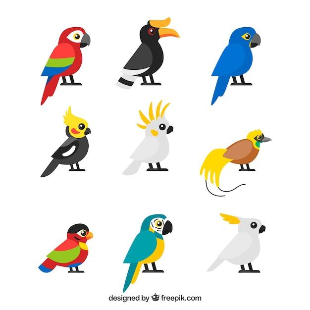 Коллекция тропических птиц из девяти Бесплатные векторы